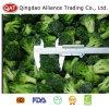 Broccoli congelé de bonne qualité avec le bon prix