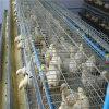 La mejor venta un tipo jaulas del huevo de la capa del pollo para la granja de la vertiente de las aves de corral en Suráfrica