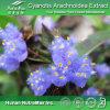 La alta calidad Cyanotis Arachnoidea Extract (20% 50% 60% 90% 95% ecdysone)