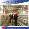 H Tipo Layer / Broiler Breeder Chicken Raring Equipment Cage