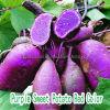 Фиолетовый цвет красного сладкого картофеля