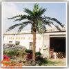 De aangepaste Decoratieve Palm van de Kokosnoot van de Installatie Plastic Kunstmatige