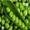 بسلة بروتين [بوودر50] 80% 85%, يفرّع حوامض كبّل أمينيّة