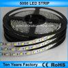 indicatore luminoso di striscia flessibile non impermeabile di 12V SMD 5050 LED
