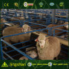 Ферма домов ягниться овец стальной структуры