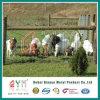 330FT clôture enduite de ferme de treillis métallique de 842-12-12.5 de poudre moutons de pâturage