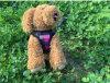 Fabricants roses confortables de harnais de cuir de chien