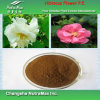 Extrait naturel de fleur de ketmie de 100% (anthocyanidines de 1%)