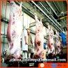 A linha de produção rebanhos animais da matança do boi de Halal do matadouro faz à máquina