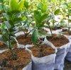 Tessuto non tessuto a gettare di alta qualità pp Spunbond per i coperchi della pianta