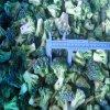 Organisch Geen Toegevoegde Bevroren Groene Bloemkool