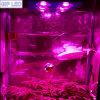 Hoge Lumen Programmable COB LED Grow Light met 90degree Lense