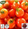 Food Additive를 위해 100% 자연적인 Tomato Extract Powder Lycopene 5% ~98%