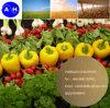 Aminosäure-Puder-Blatt- Düngemittel 100% des Pflanzenquell60% wasserlöslich