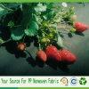 Tela não tecida do controle dos PP Spunbond Weed para a proteção da morango