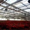 Serre à verre Multi-Span agricole pour les fleurs