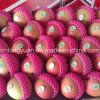 Red Star Apple con Tamaño 138/150/163/175/198