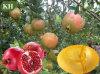 Olie van het Zaad Oil/Pomegranate van 100% de Verse Kosmetische Plantaardige (CAS Nr: 84961-57-9)