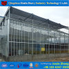 いちごのためのアジア様式のマルチスパンのガラス温室