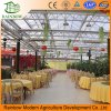 Invernadero ecológico ancho del policarbonato del policarbonato del invernadero del restaurante