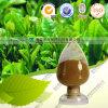 Tè naturale Polyphenol&#160 dell'estratto 98% del tè verde della capsula di Tp;