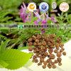 100% Pure Herb Natural Medicina Rhizoma Corydalis Yuan Hu