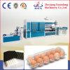 Bandeja plástica del huevo de Automaticly que hace la máquina