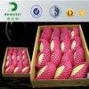 Rede plástica da flor em botão do fornecedor de China