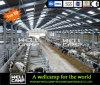 Casa larga de la vaca de la estructura de acero del marco de acero del curso de la vida de Wellcamp