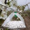 Trappe d'attrait de phéromone de sexe d'insecte de Grapholitha Molesta Busck
