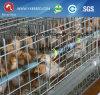Cage galvanisée de poulet de poulette