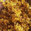 Tè dolce organico cinese di Fragrans del Osmanthus del tè del fiore del Osmanthus del tè di erba