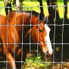 Rete fissa dello sbarco Fence/Farm Fence/Ground dell'erba
