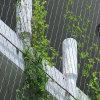 Muralla Verde Cable de acero inoxidable la compensación para las plantas trepadoras apoyo
