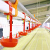 Buveur élevé de mamelon de volaille de Qualityautomatic