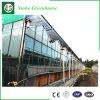 Folha de alumínio comercial do policarbonato do frame com a estufa do vidro de flutuador para Vegebable
