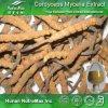 Выдержка мицелиев Cordyceps высокого качества (полисахариды 10%~50%; Кислота 7% Cordycepic)