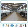 Fabbricato agricolo prefabbricato agricolo della tettoia della mucca da latte della struttura d'acciaio