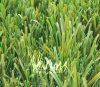 Het Synthetische Gras van het voetbal (S50431)