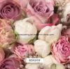 pellicole chiare del reticolo di fiore 3D idro per il contenitore di imballaggio ed uso di Dailys romantico (BDA145SF)
