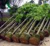 De hete Verkoop & de 2 Gallons Van uitstekende kwaliteit van de Potten van de Stof kweken Zakken met Korting