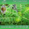 High Quality Phyllanthus Niruri Extract (Ratio: 4: 1~20: 1)