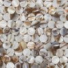 Material de construcción nacarado del azulejo de mosaico de la resina de la manera 300*300m m