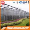 야채에 대한 농업 폴리 카보네이트 시트 온실 / 정원