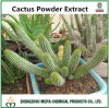 100% naturel extrait de cactus d'origine de la Chine en poudre pour la perte de poids