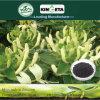 Il carbonio produttivo di aumento di Kingeta ha basato il fertilizzante composto NPK 22-7-11