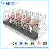 Het gegalvaniseerde Krat van het Varken van de Zwangerschap van de Zeug van de Varkens van het Varken