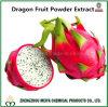 Extrato fresco do pó da fruta do dragão do extrato de Pitaya para a perda de peso