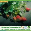 Tessuto non tessuto dei pp per controllo di Weed di agricoltura/stuoia
