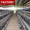 Cage de poulet de ferme du Nigéria avec le buveur et le câble d'alimentation automatiques